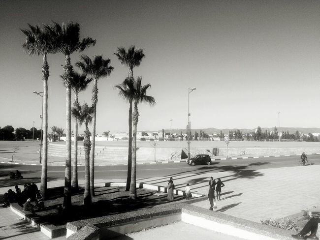 Showcase: February Black & White Palm Trees Sky Walking Peopel Road Xperia S The Tourist