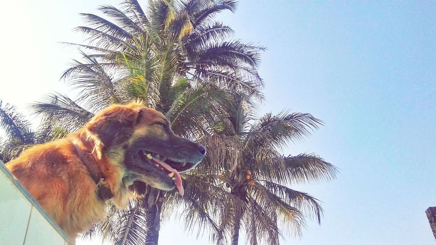 This is Max :D Dog Nature Sunday Beautiful My Smartphone Life Animals Check This Out Pet Garden Coqueiros Live For The Story Pet Portraits