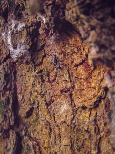 Tree Trunk Textured  Rough Close-up Tree Bark No People Day Nature Wood - Material Outdoors Tree Stump Animals In The Wild Dead Tree Animal Themes Ant On Tree