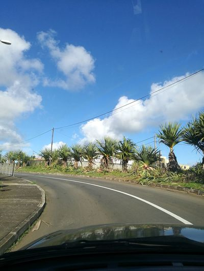 Driving Around Clear Skies Alignment Of Trees Fine Weather Blue Sky Roadway Beauty In Nature