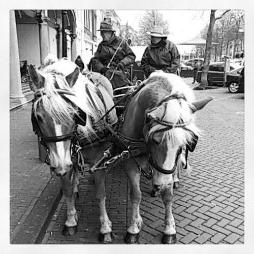 Saw some nice#Horses this afternoon Horses