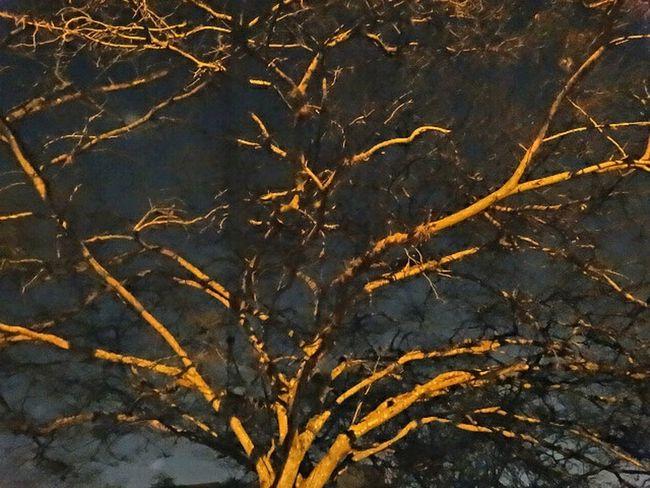 Night Lights Under Shadows Treeart EyeEm Nature Lover Umbrella