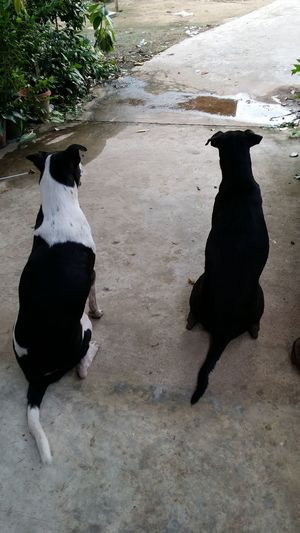 Two dogs are
