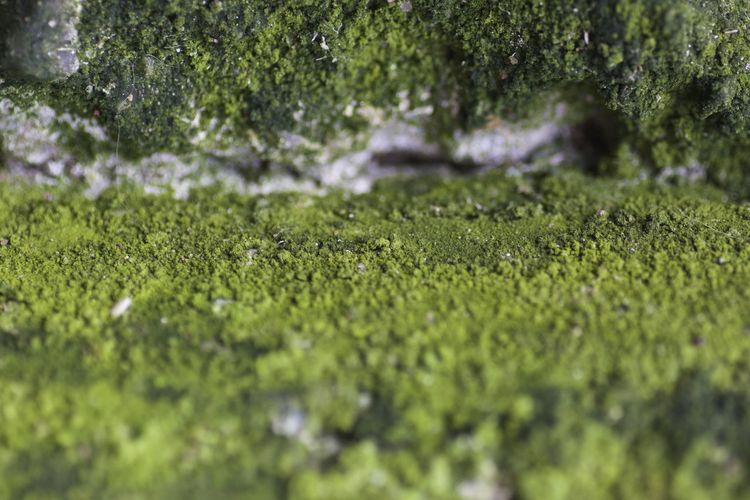 Backgrounds Beauty In Nature Close-up Green Color Natural Background Nature No People Outdoors Tranquility