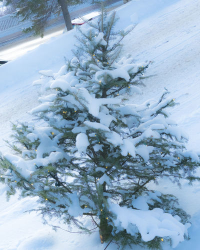 Short and stubby pine tree covered in snow and decorated with lights Christmas Tree Cold Cold Temperature Covering Day Evergreen Frozen Nature No People One Animal Outdoors Real Tree Remote Season  Snow Snow Covered Weather White White Color Winter