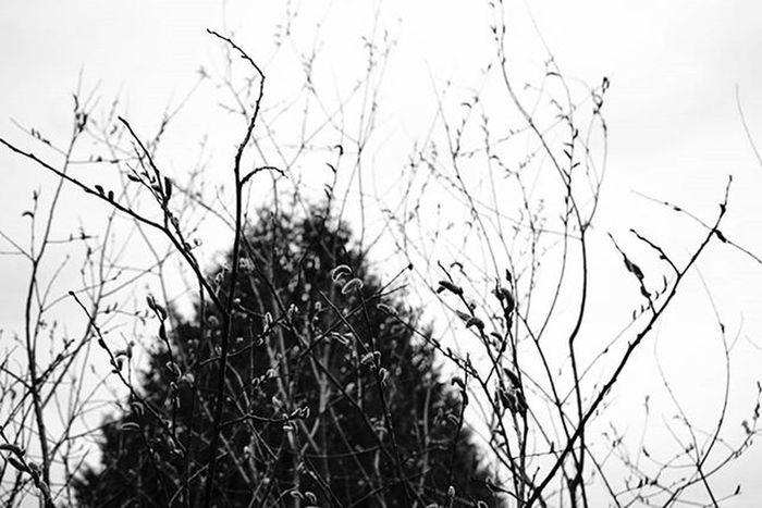 Branches Reimerpics Blackandwhite Photo Trees