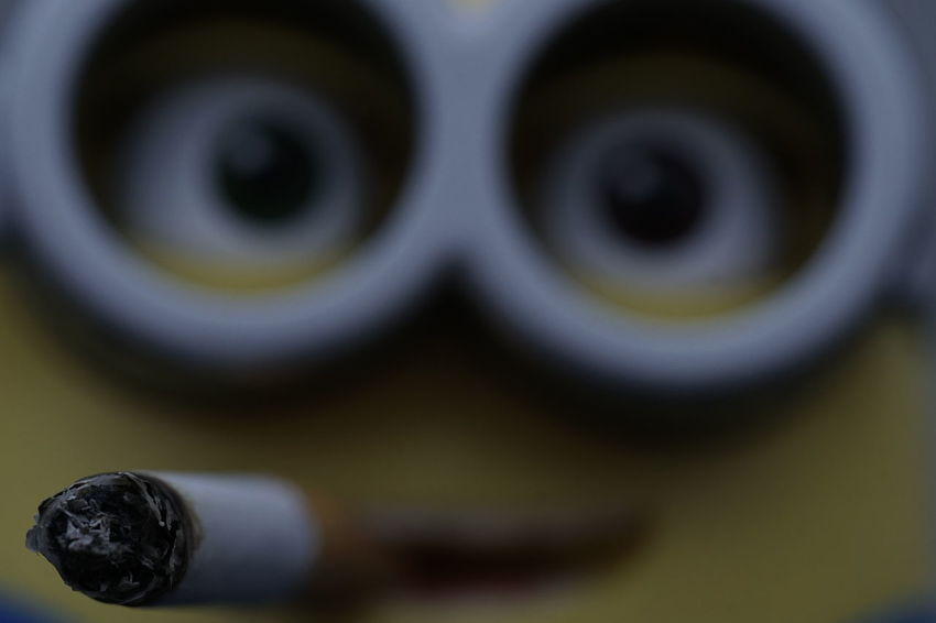 A Billions of minions...😍 Bob...the minion - Picture 2 - No Edit/But Filter Pall Mall with @joka_110😯 - Exif: 100mm macro prime lense, f/7.1, 1/125 sec., ISO 400 (Handshot)Close-up No Edit/no Filter Toy Photography Fine Art Photography Smoke Smoker Minion No People Toyphotography Capture The MomentThe Purist (no Edit, No Filter) Good Morning Fineart Toys Minions
