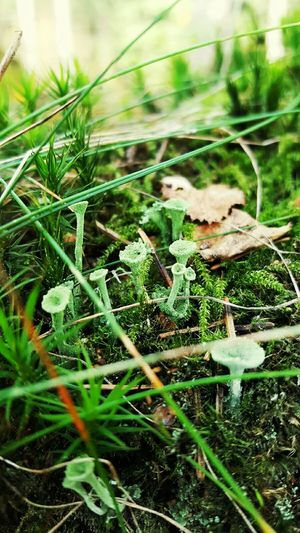 Nature Forest Photography Landscape Nature New Talents Nature Photography Mushrooms 🍄🍄 Mushrooms Mushroom