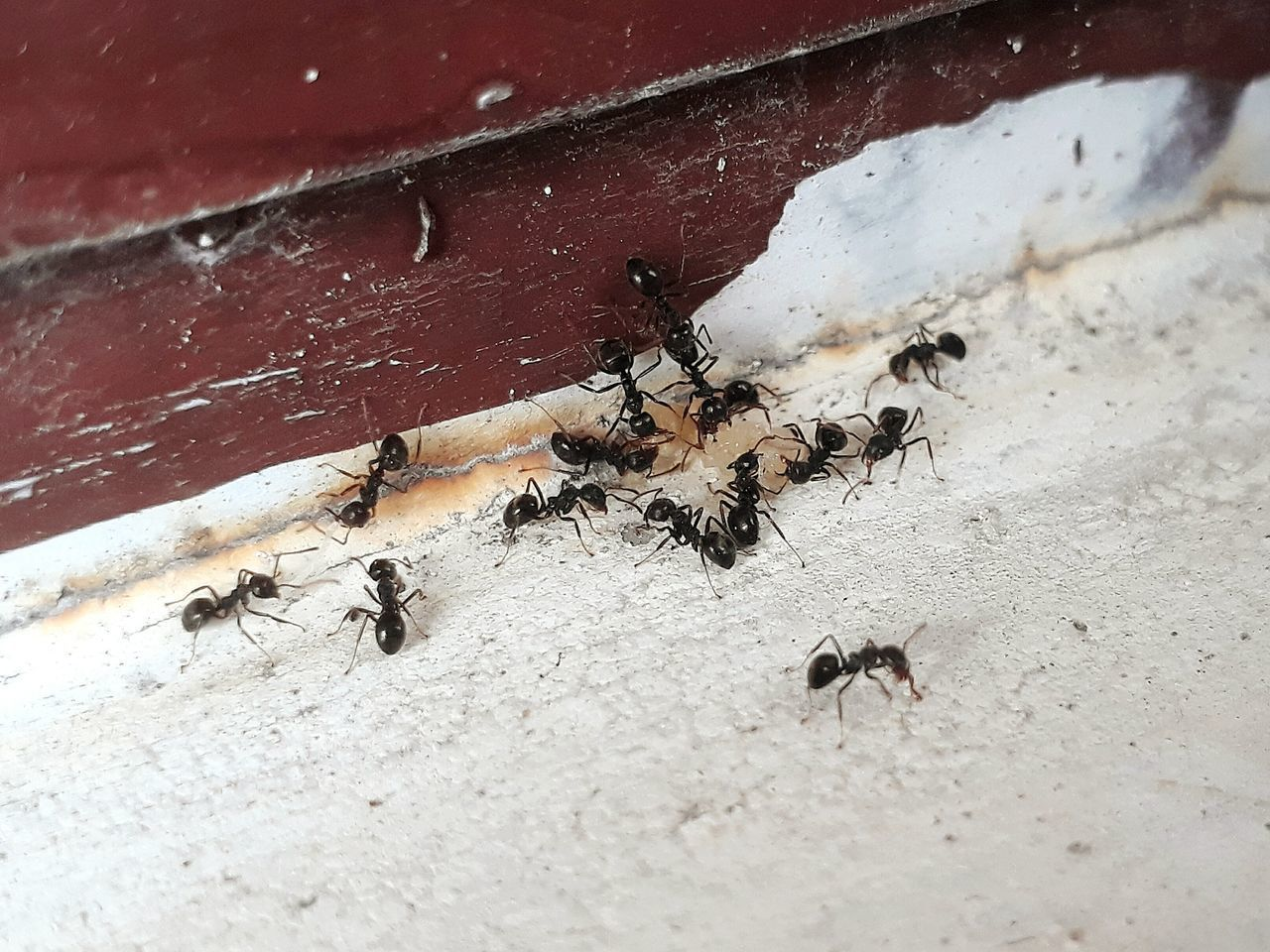 animals in the wild, animal themes, insect, animal wildlife, ant, day, high angle view, outdoors, no people, colony, large group of animals, nature, close-up, bee, teamwork