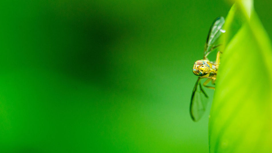 Animal Themes Animal Wildlife Animals In The Wild Beauty In Nature Close-up Day Green Color Insect Macro Macro Nature Macro Photography Macro_collection Macroclique Nature No People One Animal Outdoors