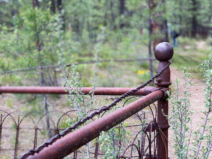 Close-up of rusty metal fence against trees in forest
