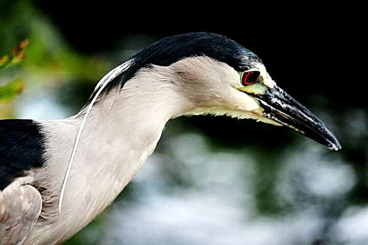 Streamzoofamily Tadaa Community Wild Birds Blue Heron Tropical Birds Of Prey EyeEm Nature Lover Check This Out Taking Photos