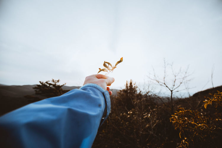 Cropped hand holding twigs against sky