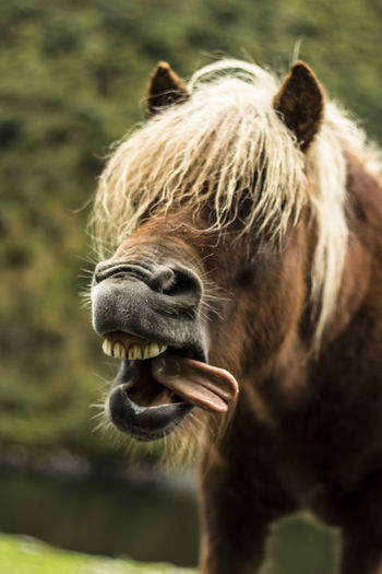 Funny horse. Horse One Animal Animal Themes Domestic Animals Animal Body Part Animal Head  Animal Hair Mane Close-up Mammal Livestock No People Outdoors Focus On Foreground Animal Wildlife Portrait Norway🇳🇴 Lost In The Landscape Been There. Done That.