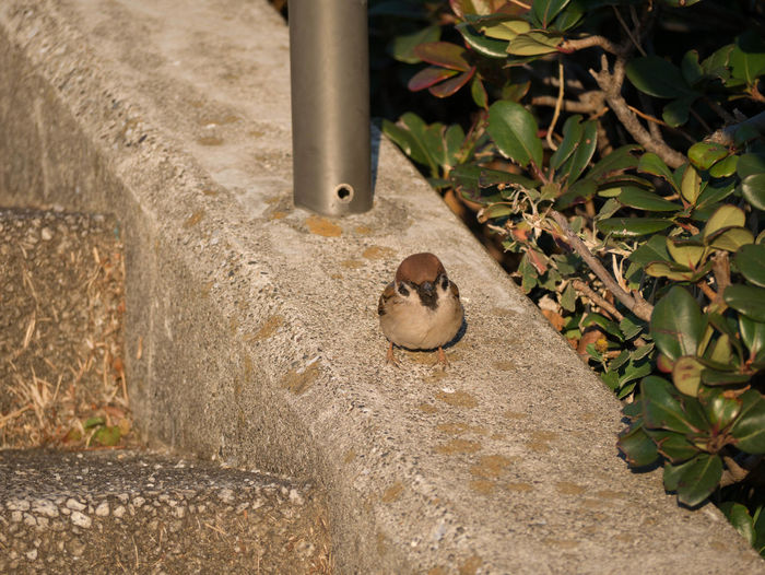 High angle view of bird