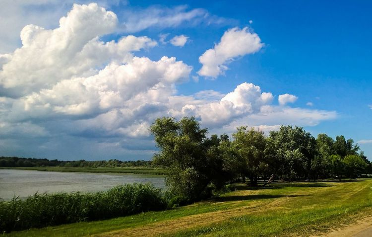 Tree Cloud - Sky Sky Nature Blue Beauty In Nature Tranquility Day Outdoors No People Scenics Landscape Grass Freshness Sommergefühle Nature Photography Lakeview Lake Tisza Sunlight Beauty In Nature Nature Water EyEmNewHere Lake View Blue Sky