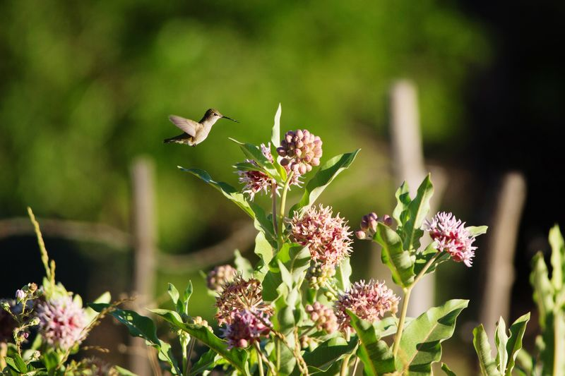 Close-up of bird flying over plants