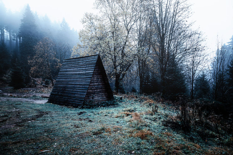 Tree Plant Architecture Built Structure Bare Tree Nature Land No People Staircase Forest Sky Day Wood - Material Abandoned Tranquility Fog Building Exterior Outdoors Scenics - Nature Cottage Harzmountains Harz Eckerloch