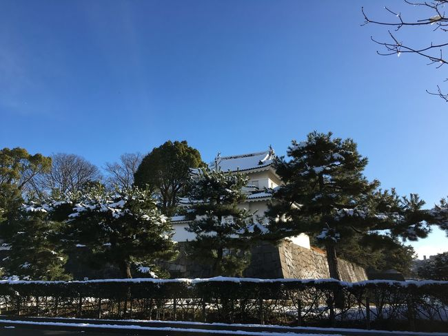 Blue Sky Cold Japanese Castle Nijo Castle Old Building  Snow Trees Winter