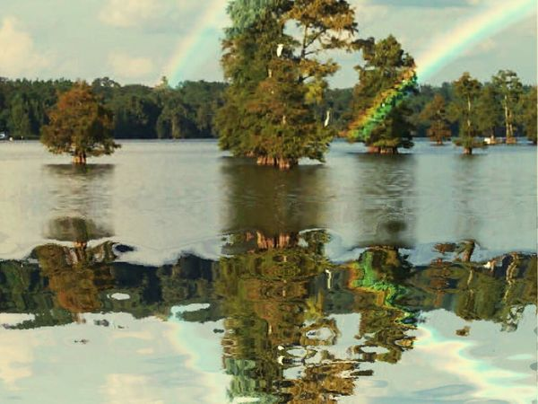 At family's lake house on Caddo Lake in Shreveport La. Tree Water Nature Reflection Lake Sky Beauty In Nature Day Scenics No People Outdoors Waterfront Tranquility Growth Rainbows Rainbow