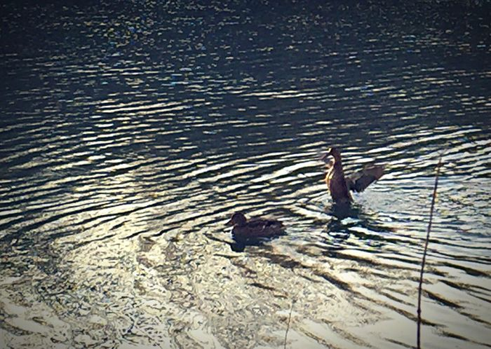 RePicture Giving toujours avoir un œil dans le rétroviseur.... Oiseaux Au Bord De L'eau Charente Birds