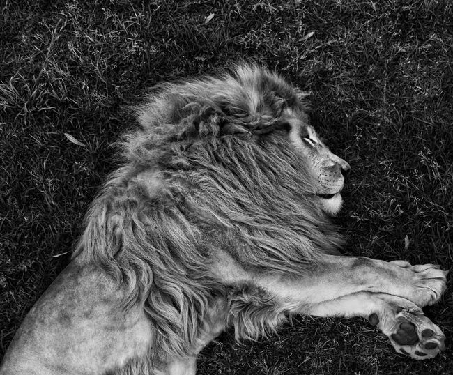 The King Wildlife Bnw Blackandwhite Monochrome Blackandwhitephotography Bnwworld Blackandwhiteworld Bw First Eyeem Photo