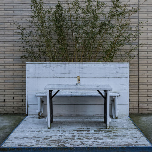white Rotten Brittle Peeling Bench Hafencity Hamburg Nikon Plant Architecture Bench Built Structure Day Nature Nikonphotography No People Outdoors Plant Seat Table Tree Wall - Building Feature White Furniture Wood - Material