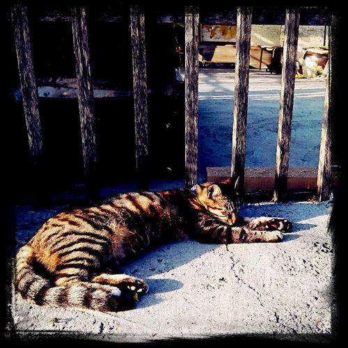 睡午覺 Cat