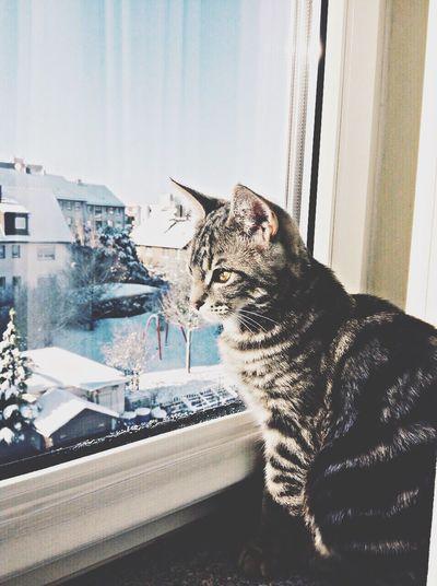 Winterwonderland Franky