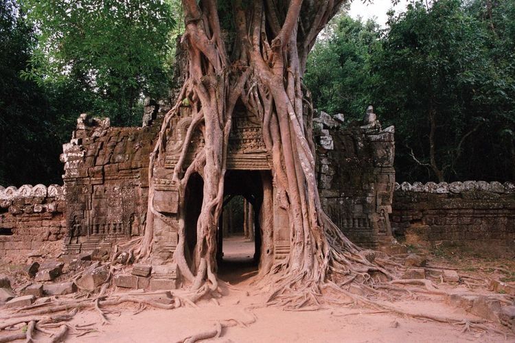 Analogue Photography Filmisnotdead Tree Old Ruin Ancient History Architecture Built Structure Travel Destinations Ancient Civilization Nature Building Exterior