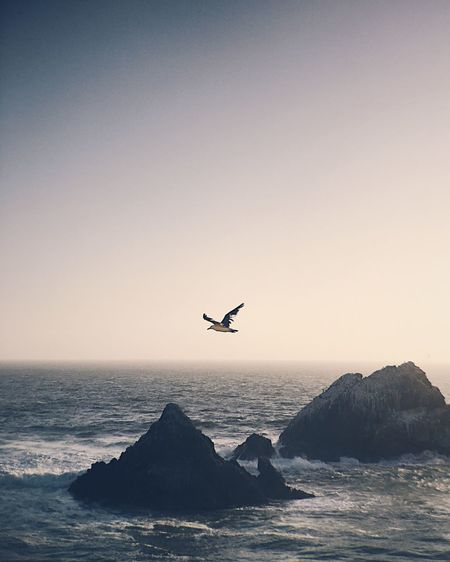 Bird flying over sea against clear sky