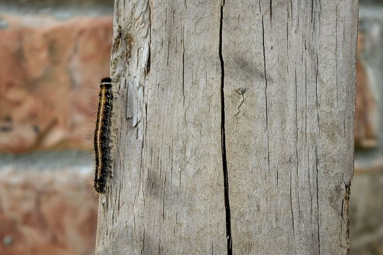 Mammal Wood -