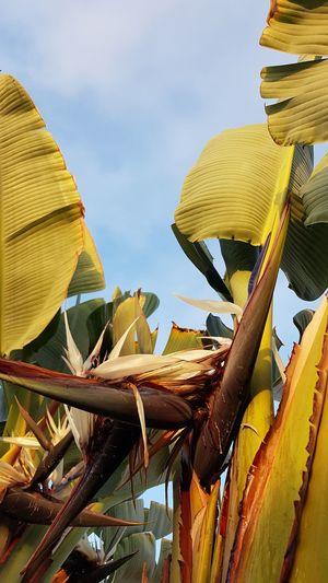 Palmtree with