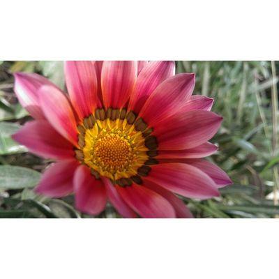 صورة بدون اي تعديل، سبحان الخالق تصويري  تصوير  مصر A picture with Nofilter , Spring is coming brace yourselves. everydayeverywhere Egypt