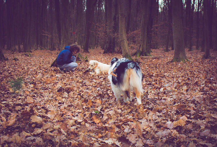 Rear view of animals in forest during autumn