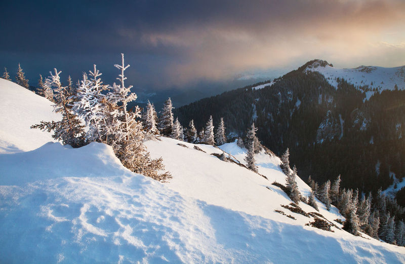 Winter landscapes in a perfect light from Ciucas Mountains, Romania. Atmosphere Beautiful Fairytale  Ice Light Nature Travel Winter Background Beauty In Nature Blue Cold Cold Temperature Forest Landscape Mountain No People Outdoor Pine Tree Sky Snow Sunset Tranquility Vacation White