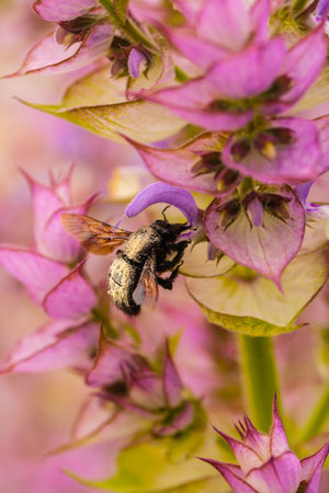Une journée au Potager du Roi Animal Animal Themes Animal Wildlife Animals In The Wild Beauty In Nature Bee Bumblebee Close-up Flower Flower Head Flowering Plant Fragility Freshness Growth Insect Invertebrate No People One Animal Outdoors Petal Pink Color Plant Pollen Pollination Vulnerability
