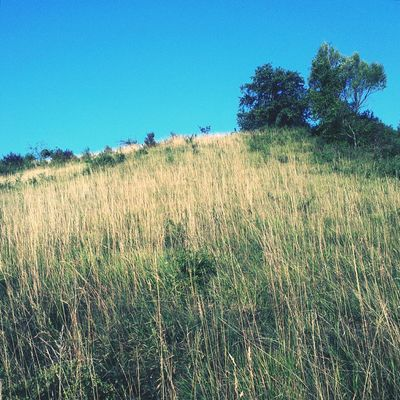 Tree. Croatia Landscape Grassland Early Morning