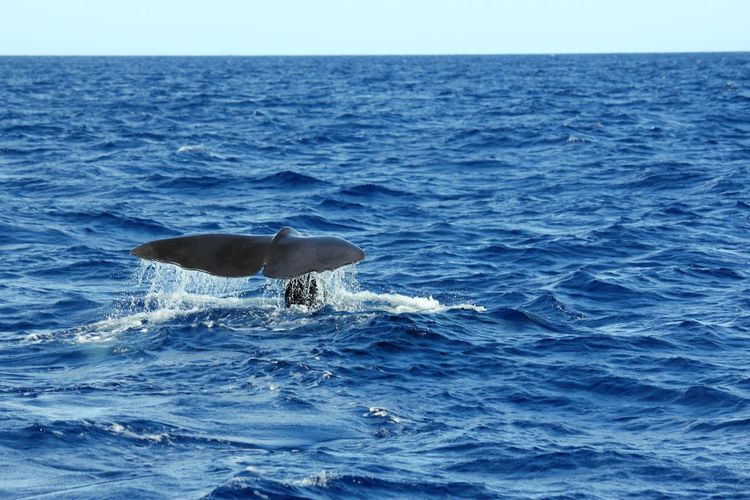 Whale swimming in sea against blue sky