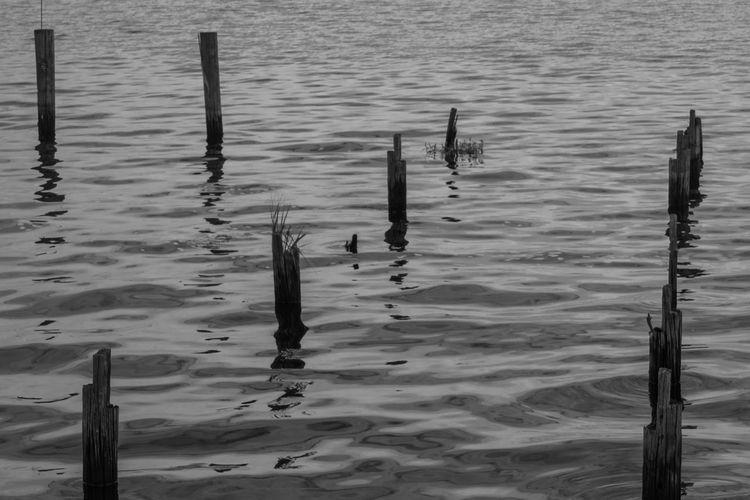 Lake Monroe EyeEm Best Shots EyeEm Best Shots - Black + White Blackandwhite Blackandwhite Photography Water Florida GayneGirlPhotography EyeEm Gallery EyeEmBestPics Eyeemphotography Black And White Photography