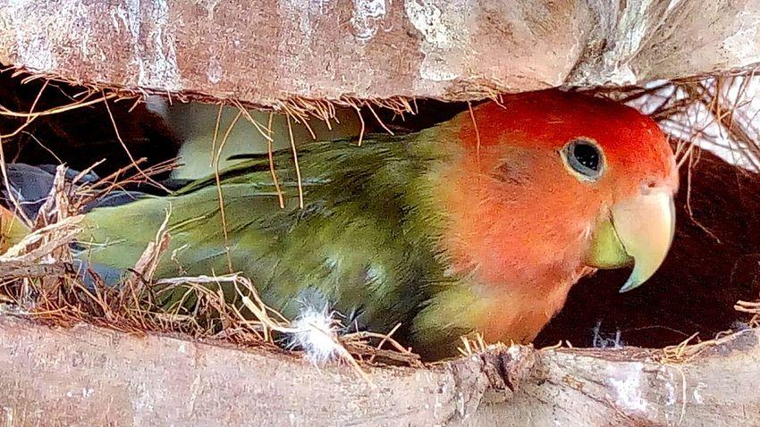 Birds_collection Bird In The Zoo Bird Bird Nest Nest