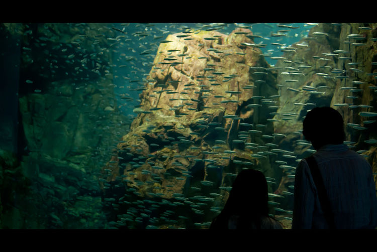 Shadows & Lights Aquarium Fish Fish Swarm Indoors  Real People Sea Life Shadow Swarm Water