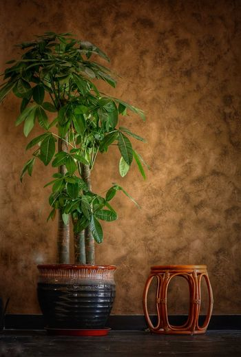 Plant Potted