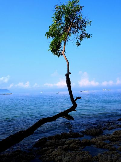 Close-up of tree branch at sea against sky