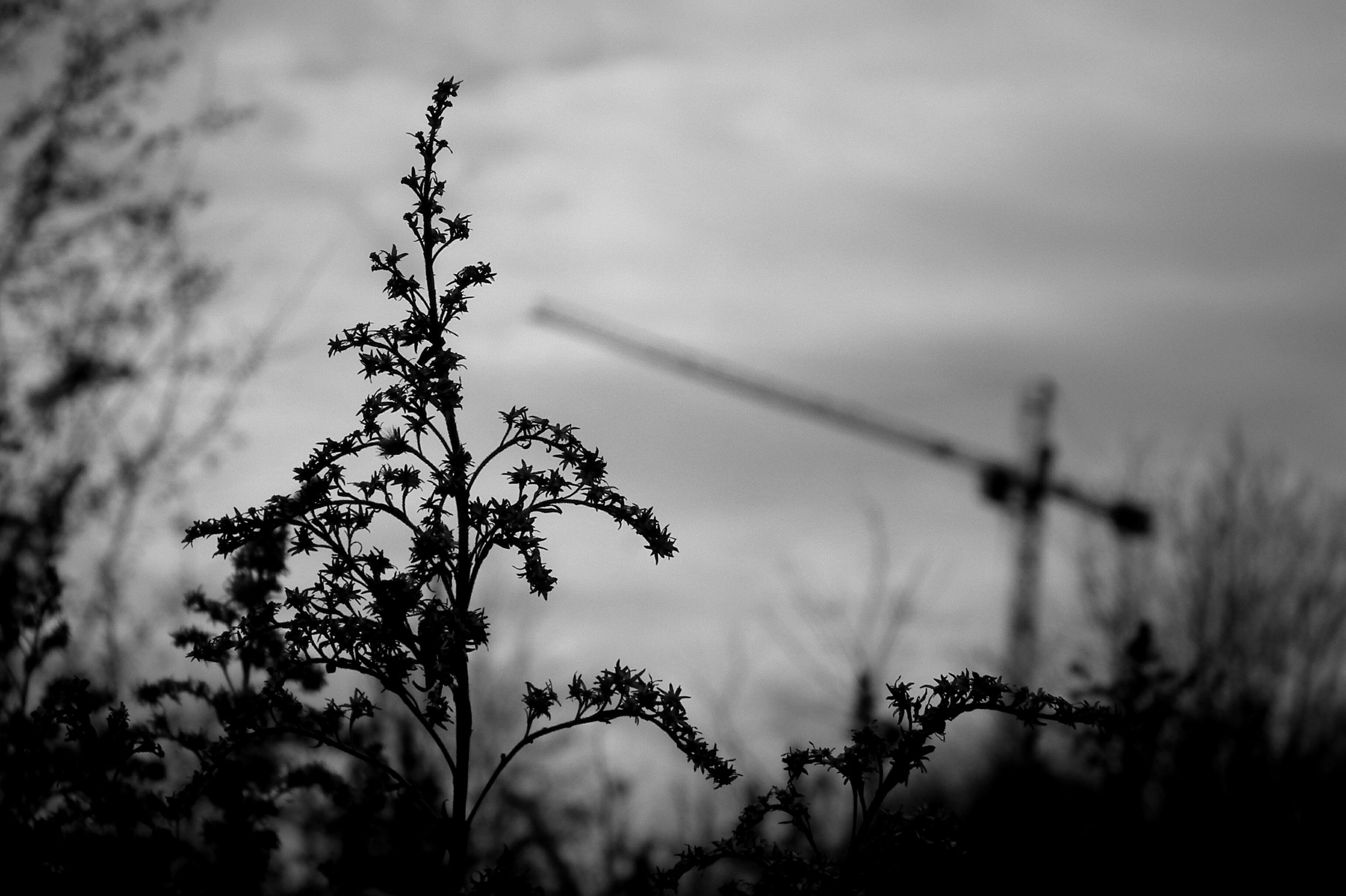 growth, plant, focus on foreground, close-up, nature, dusk, beauty in nature, flower, selective focus, sky, field, scenics, fragility, tranquility, day, outdoors, tranquil scene, no people, growing, high section, non-urban scene, freshness, cloud - sky