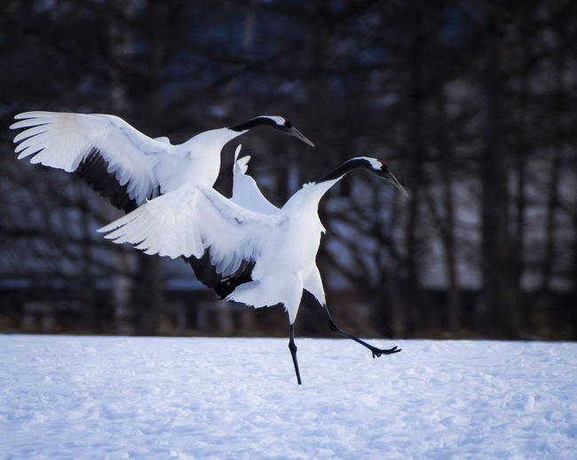 Bird flying over snow