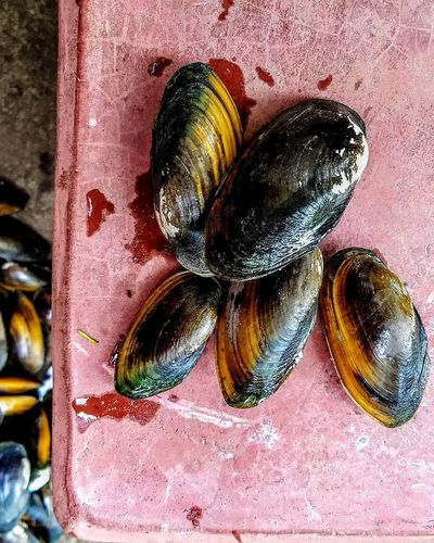 Close-up Nature EyeEm Selects Mussel Shell Mussels WestBengal The Great Outdoors - 2017 EyeEm Awards Hometown Love PhonePhotography Motog5plus Loveonthesidelines Love To Take Photos ❤ Travel Destinations The Street Photographer - 2017 EyeEm Awards