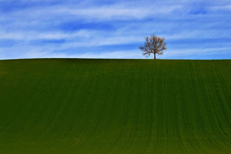 Low angle view of bare tree on hill