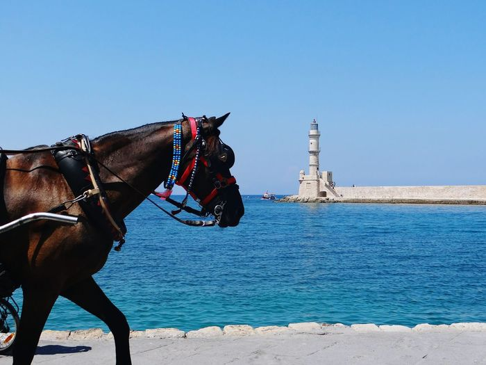 Horse walking on seashore in greece