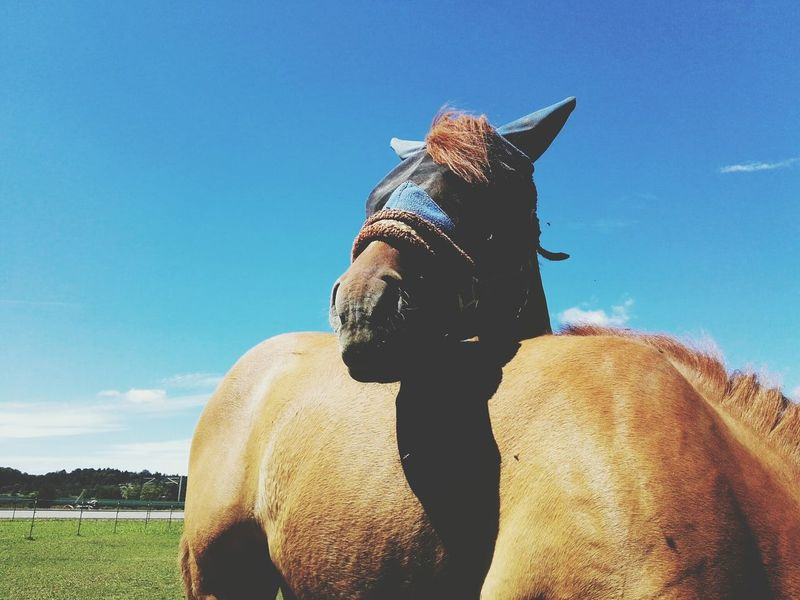 Horses Sky Mammal Domestic Animals Animal Themes Outdoors Close-up Nature Horse Horse Riding Horse Life Horse Therapy Horse Theme